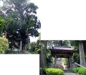 山門と巨木