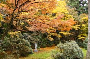 大原三千院の庭