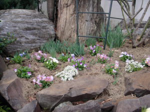 花壇の植え込み